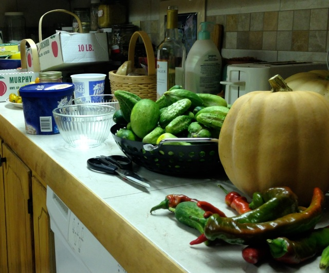 A kitchen full of bounty